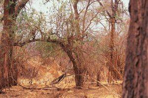 Giraffe in omgeving